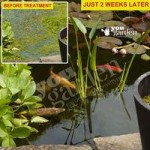 Bio Pond Clear ULTRA Treatment Kit for Small ponds (12,500L)