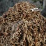 Rooty Moss 500g compressed basket moss slab