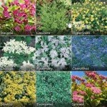 Complete Hardy Shrub bundle – 10 plants
