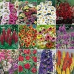 Complete Hardy Garden Perennial Plant collection – 24 plug plants