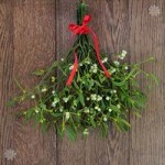 Bunch of Fresh Real Mistletoe – 10 sprigs