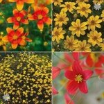 Trailing Bidens Plants Hot & Firey mix x 12 plugs